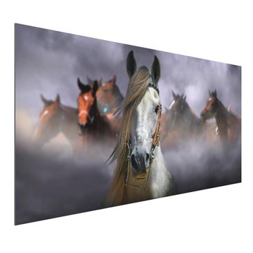 Produktfoto Aluminium Print - Horses in the Dust - Querformat 1:2