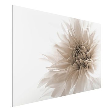 Produktfoto Aluminium Print - Dahlie in Würde - Querformat 2:3