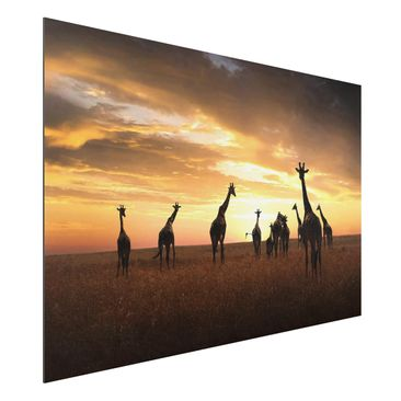 Produktfoto Aluminium Print - Giraffen Familie - Querformat 2:3