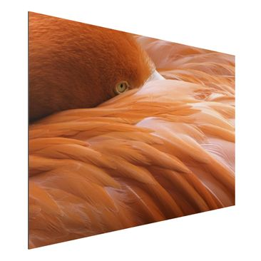 Produktfoto Aluminium Print - Flamingofedern - Querformat 2:3