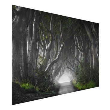 Produktfoto Aluminium Print - Wald in Nordirland - Querformat 2:3