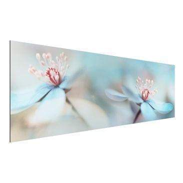 Produktfoto Aluminium Print - Blüten in Hellblau - Panorama Querformat