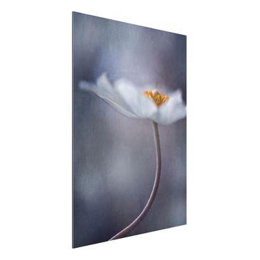 Produktfoto Aluminium Print - Weiße Anemonenblüte - Hochformat 4:3