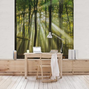 Product picture Photo Wall Mural - Sunny Day In The...