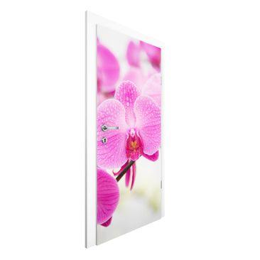 Produktfoto Vliestapete Tür Premium - Nahaufnahme Orchidee - Türtapete