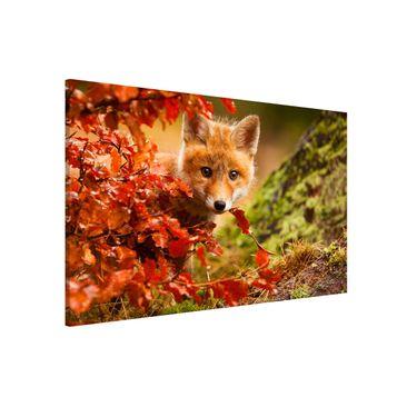 Produktfoto Magnettafel - Fuchs im Herbst - Memoboard Querformat 2:3