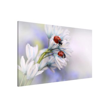 Product picture Magnetic Board - Ladybugs Couple -...