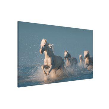 Immagine del prodotto Lavagna magnetica - Schimmel Herd - Formato orizzontale 3:2