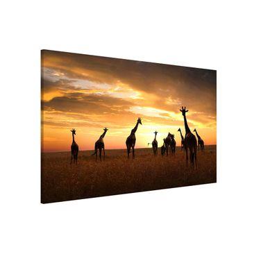 Produktfoto Magnettafel - Giraffen Familie - Memoboard Querformat 2:3