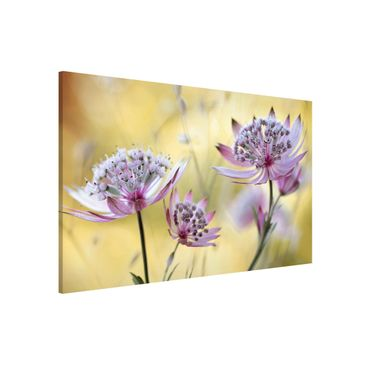 Product picture Magnetic Board - Astrantia Major -...
