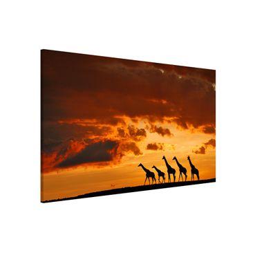 Produktfoto Magnettafel - Fünf Giraffen - Memoboard Querformat 2:3
