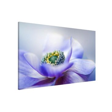 Product picture Magnetic Board - Anemone De Caen -...