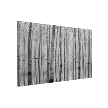 Product picture Magnetic Board - Birches In November -...