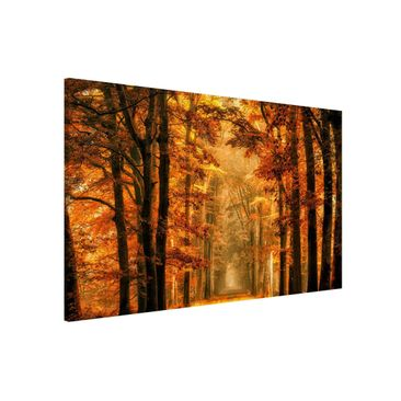 Product picture Magnetic Board - Enchanted Forest In...