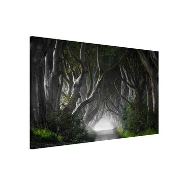 Product picture Magnetic Board - Forest In Northern...