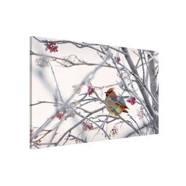 Product picture Magnetic Board - Waxwing In Tree -...