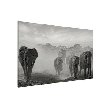 Produktfoto Magnettafel - Elefantenherde - Memoboard...