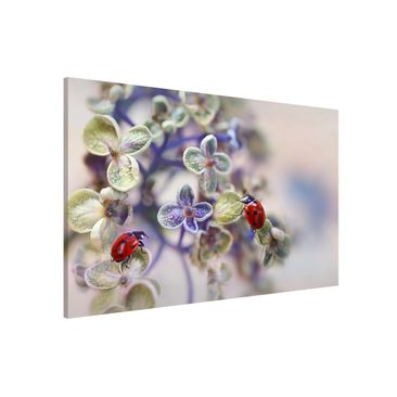 Product picture Magnetic Board - Ladybug In The Garden -...