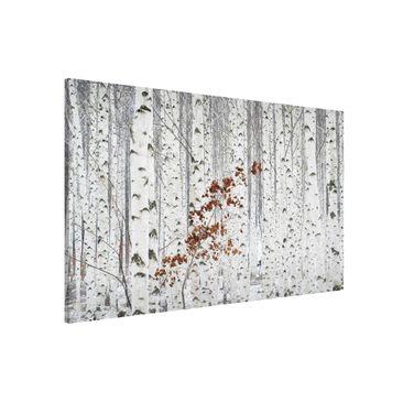 Produktfoto Magnettafel - Birken im Herbst - Memoboard Querformat 2:3
