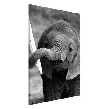 Produktfoto Magnettafel - Elefantenbaby - Memoboard Hochformat 3:2