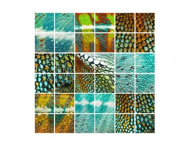 Product picture Tile Mural Reptile Structure