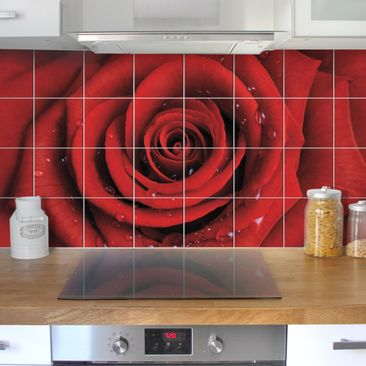 Produktfoto Tile Mural Red rose with water drops