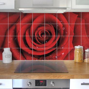 Produktfoto Fliesenbild Rote Rosen mit Wassertropfen