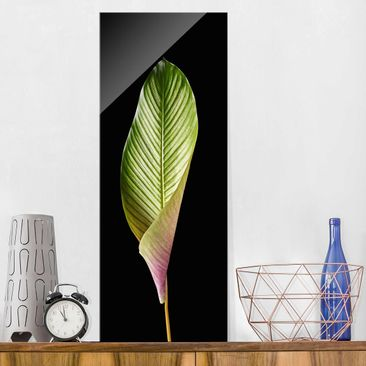Product picture Print on Glass - Leaf Calathea Ornata On...