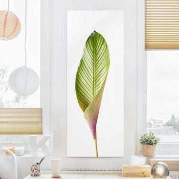Produktfoto Glasbild - Blatt Calathea-ornata 03 - Panel