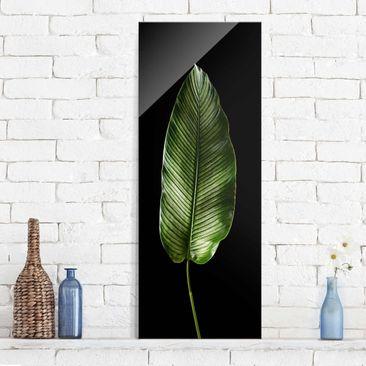 Produktfoto Glasbild - Blatt Calathea-ornata auf...