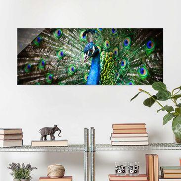 Produktfoto Glasbild - Edler Pfau - Panorama