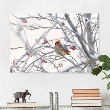 Produktfoto Glasbild - Seidenschwanz im Baum - Querformat 2:3
