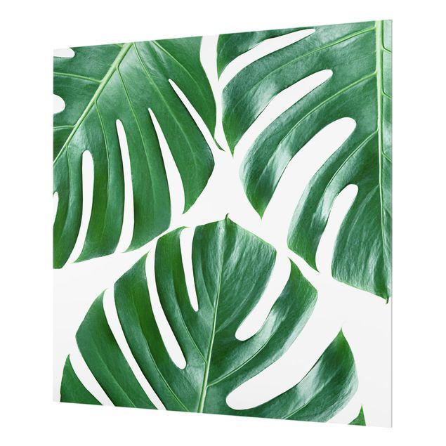Produktfoto Spritzschutz Glas - Tropische grüne Blätter Monstera - Quadrat 1:1