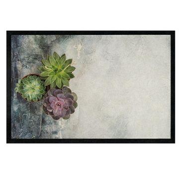 Immagine del prodotto Zerbino - Three succulents