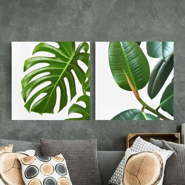 Product picture Canvas Art - Monstera And Rubber Tree -...