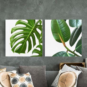 Produktfoto Leinwandbild 2-teilig - Monstera und Gummibaum - Quadrate 1:1, vergrößerte Ansicht in Wohnambiente, Artikelnummer 225894-XWA