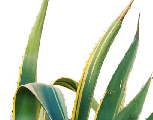 Produktfoto Fliesenbild Agave