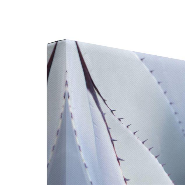 Produktfoto Leinwandbild 2-teilig - Agavenblätter - Hoch 4:3, Keilrahmen Rückseite, Artikelnummer 225901-FB