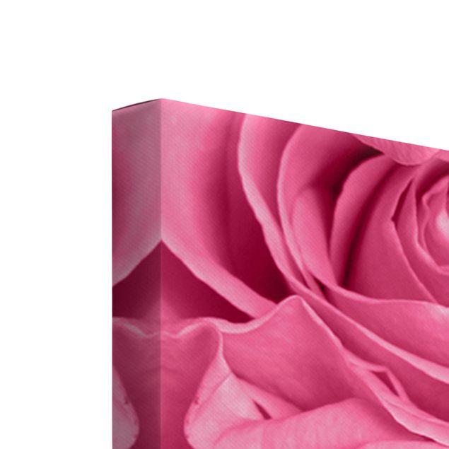 Produktfoto Leinwandbild 5-teilig - Rosa Rosen, Keilrahmen Rückseite, Artikelnummer 225910-FB