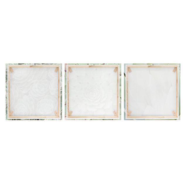 Produktfoto Leinwandbild 3-teilig - Kakteen Trio - Quadrate 1:1, Frontalansicht, Artikelnummer 225913-FF