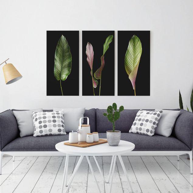 Produktfoto Leinwandbild 3-teilig - Große Blätter Calathea-ornata auf Schwarz - Hoch 2:1, in Wohnambiente, Artikelnummer 225915-WA