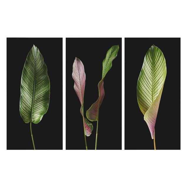 Produktfoto Leinwandbild 3-teilig - Große Blätter Calathea-ornata auf Schwarz - Hoch 2:1, Frontalansicht, Artikelnummer 225915-FF