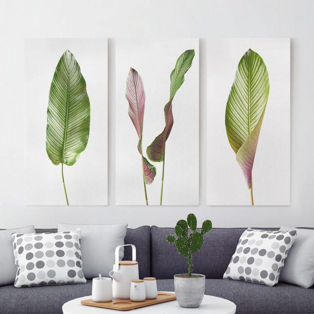 Produktfoto Leinwandbild 3-teilig - Große Blätter Calathea-ornata - Hoch 2:1, vergrößerte Ansicht in Wohnambiente, Artikelnummer 225916-XWA