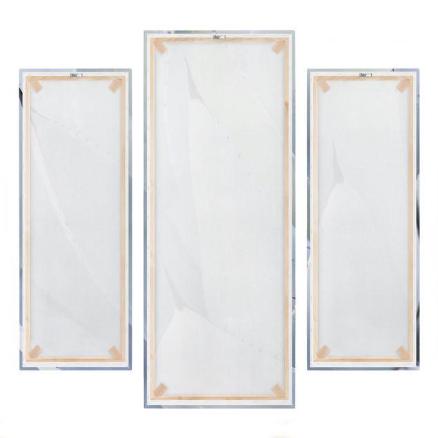 Produktfoto Leinwandbild 3-teilig - Agavenblätter - Galerie Triptychon, Spiegelkantendruck rechts, Artikelnummer 225931-FR