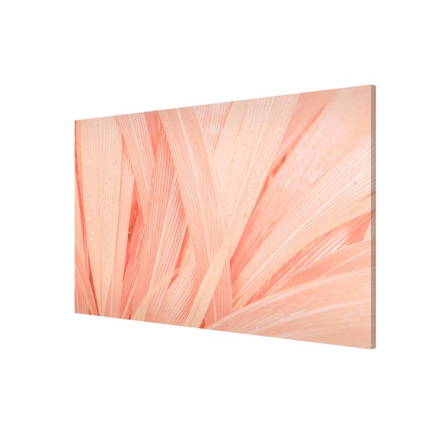 Produktfoto Magnettafel - Palmenblätter Rosa -...