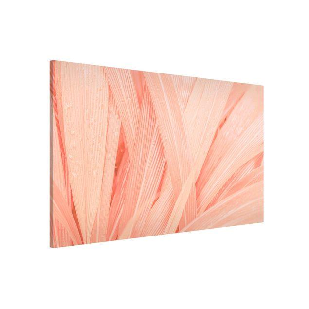 Produktfoto Magnettafel - Palmenblätter Rosa - Memoboard Querformat 2:3