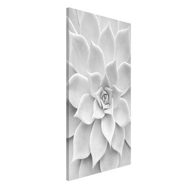 Produktfoto Magnettafel - Kaktus Sukkulente - Memoboard Hochformat 4:3