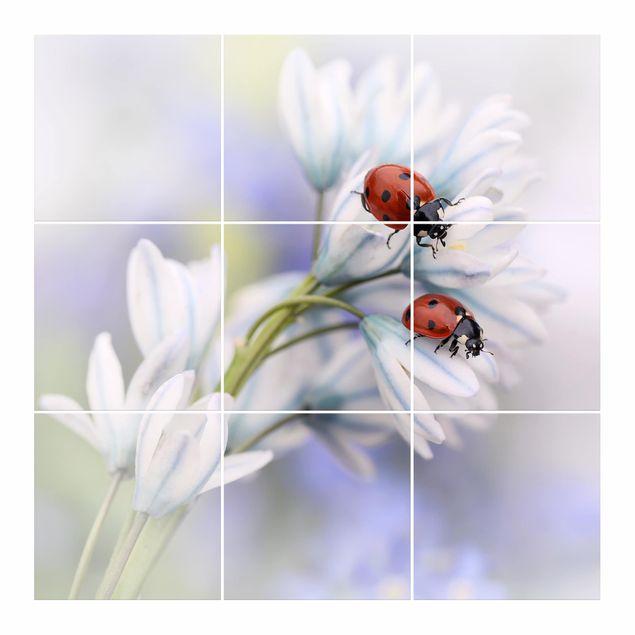 Produktfoto Fliesenbild - Marienkäfer Paar - Fliesensticker Set quadratisch