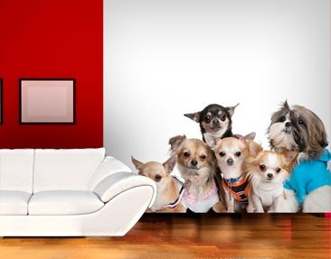 Produktfoto Photo Wall Mural Chihuahuas and a Shi