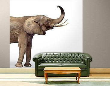Produktfoto Selbstklebende Tapete - Fototapete Trompetender Elefant I